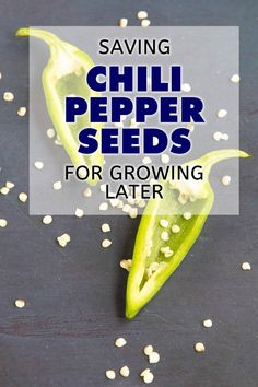Pepper Seeds for Growing Later Learn how to save chili pepper seeds from your garden-grown peppers so you can store them and use them to grow peppers the next season. Chilli Seeds, Pepper Seeds, High Calorie Diet, Growing Peppers, Coconut Oil Weight Loss, How To Eat Less, Stuffed Green Peppers, Saving Seeds, Store