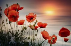 Abendstimmung by Christine Ellger Photo 149545915 Abendstimmung by Christine Ellger Photo 149545915 The post Abendstimmung by Christine Ellger Photo 149545915 appeared first on Fotografie. Watercolor Flowers, Watercolor Paintings, Poppies Painting, Flower Oil, Red Poppies, Acrylic Art, Beautiful Flowers, Canvas Art, Wordpress