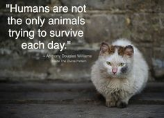 :(( don't shop, please adopt, if you can't please donate to a no kill shelter. If we all do our part we can help so many!