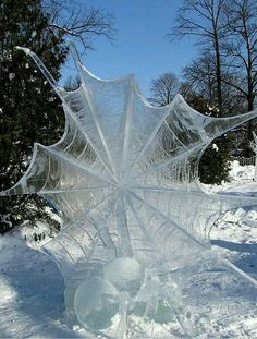 Spider and Web in ice and snow