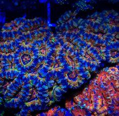 Hella dope coral reef