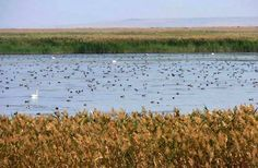 Saryarka, Steppe and Lakes of Northern Kazakhstan