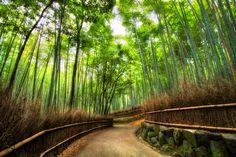Sagano Bamboo Forest, Arashiyama