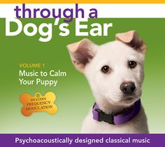 Through a Dogs Ear - Using music and sound to help calm down your pupy
