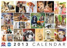 Calendar 2013 - Front Cover 2013 Calendar, Calendar Ideas, Animal Rescue, Fundraising, Foundation, Channel, Group, Cover, Dogs