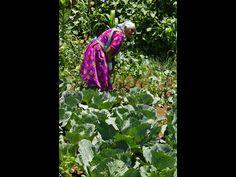 Catalina Cruz en su traspatio donde cultivan toda clase de plantas medicinales que usan en la preparación de sus remedios y medicinas