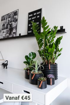Decor, Room, Rustic Industrial Decor, Plant Decor Indoor, Home Decor, Room Inspiration, Bedroom Decor, Plant Decor, Trending Decor