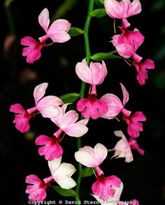 Orchids | David Stern Photography