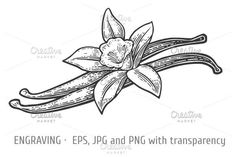 Vanilla pods and flower engraved   @creativework247