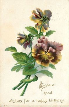 Mauve Purple Yellow Pansies Stem Bouquet Raphael Tuck Birthday Postcard Series | eBay