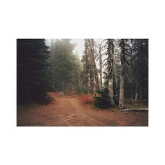FFFFOUND!   plastic_sfoonss on Xanga ❤ liked on Polyvore featuring pictures, backgrounds, photos, images, pics and filler