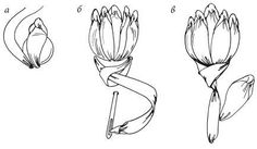 How to add a calyx and stem to your ribbon flower