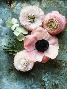 Flowers bouquet floral arrangements ranunculus ideas for 2019 My Flower, Fresh Flowers, Spring Flowers, Beautiful Flowers, Spring Colors, Cactus Flower, Exotic Flowers, Purple Flowers, Hydrangea Flower