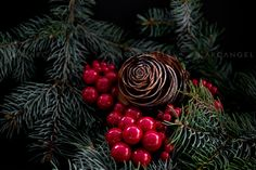 Arcangel - #photography #Christmas #pinecone #berries #nature #pine #tree #Xmas #canoneos5dmarkIII #RightsManaged #arcangelimages