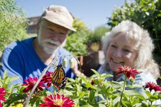 "Monarch hatches at conservation ""waystation"" in Emigrant"