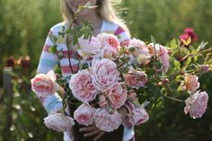All My Thyme @ Floret Flower Farm/garden roses