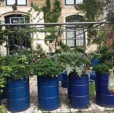 Jardim de ervas por Paola Navone #paolanavone #interiordesign #decoration #designdeinteriores #jardim #paisagismo #landscape #garden