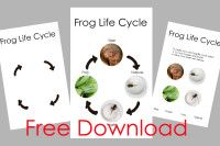 Free Download – Frog Life Cycle Printable » We Live We Learn