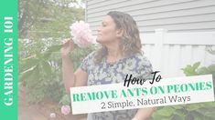 NEW! How to Remove Ants on Peony Plant Peony Plant, Home Planner, Pink Petals, Flowers Perennials, Past Life, Home Staging, Gardening Tips, Peonies, Flower Arrangements