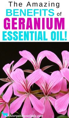 Aromatherapy Recipes, Essential Oil Recipes, Essential Oil Diffuser Blends, Geranium Essential Oil Uses