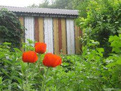 Swedish garden