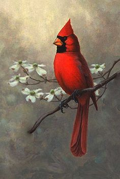 Nc State Bird Cardinal Pic Shows Male And Female