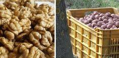 Jak uchovat ořechy klidně i 10 let s nezměněnou chutí. Nezatuchnou a ani neplesniví! Dog Food Recipes, Food And Drink, Ale, Cooking, Breakfast, Advent, Syrup, Baking Center, Ale Beer