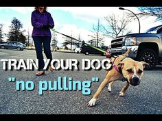 Train Your Dog to NOT PULL on Walks - Loose Leash Walking - YouTube