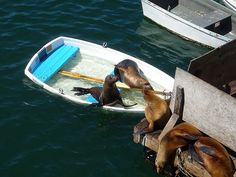 California Sea Lions taking over a boat by oceana.org, via Flickr