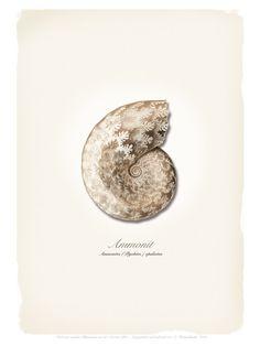Digitaldruck - AMMONIT - ein Designerstück von ART11 bei DaWanda