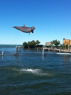 Dophins are Free and Playful!! Energy for 2013