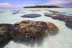 Sangalaki Island, East Borneo - Indonesia