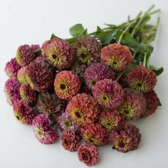Zinnia Queen Red Lime – Floret Flower Farm is an amazing seed source how to site. I ordered these seeds. Cut Flower Garden, Flower Farm, Flower Of Life, Flower Gardening, Unique Flowers, Cut Flowers, Beautiful Flowers, Summer Flowers, Dried Flower Bouquet
