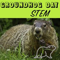 Groundhog Day STEM  Grades 4-7  Ever wonder why the groundhog sometimes sees his shadow and other years he doesn't? In this activity your students will collect data from the past 100 years, analyze it, and draw conclusions about how weather conditions and temperature affect the groundhog's decision.