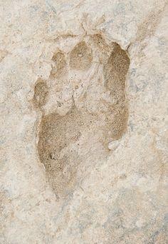 Photo: Oldest Human Footprints With Modern Anatomy   1.5 million years old, found in Kenya