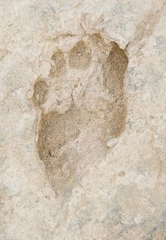Photo: Oldest Human Footprints With Modern Anatomy | 1.5 million years old, found in Kenya