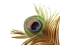 peacock feathers...my Aunt Ruth had so many peacocks running around. We used to gather the feathers and you would have thought we had a million dollars!