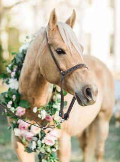 Elegant Southern Wedding Inspiration Elegant Southern Wedding Inspiration Flower garland for a horse Cute Horses, Pretty Horses, Horse Love, Beautiful Horses, Animals Beautiful, Anglo Arabe, Cavalo Wallpaper, Horse Wedding, Wedding Shoot