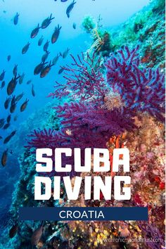 Scuba diving in Croatia is a magical adventure and should be on every diver's bucket list! Discover the colourful and beautiful underwater world of Murter and the Kornati National Park! This is one diving destination that you do not want to miss! Best Scuba Diving, Scuba Diving Gear, Cave Diving, Underwater Creatures, Underwater World, Backpacking Europe, Croatia Travel Guide, Koh Tao, Best Places To Travel