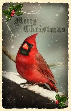 christmas images business christmas c - Images Vintage, Vintage Christmas Images, Antique Christmas, Vintage Holiday, Christmas Pictures, Vintage Cards, Vintage Pictures, Christmas Bird, Christmas Scenes