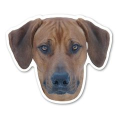 Show your love for your Rhodesian ridgeback with this car magnet!