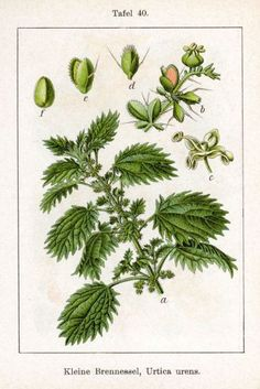 Medicinal Herbs and their uses during WWII. A fascinating read!