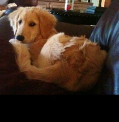 This is how Carly looks when she gets caught on the couch.