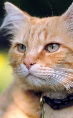 #CuteCatsKittensVideo Funny cats Videos Vines 2016 Cute kittens doing funny thing video pictures  More cute kittens HERE http://www.youtube.com/user/TheFederic777?sub_confirmation=1  Cute Pet Pictures, Pics: Kittens, Cat, Cats, Piglets, Dogs, Puppies, Pets & Animals, Katze, Katzen, süß, klein, große Liebe, Katzenkind, Katzenkinder, schwarze Katze, schnuckelig, zuckersüß, große Augen, 고양이