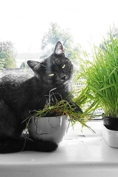 Our little cat Gunner Batman, Superhero, Photo And Video, Animals, Fictional Characters, Instagram, Art, Black, Cats