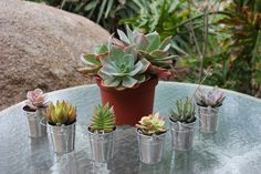 succulents in tiny galvanized buckets as favors- Cute!