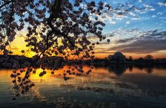 Cherry Blossom Sunrise Photo by Mike Szymecki -- National Geographic Your Shot