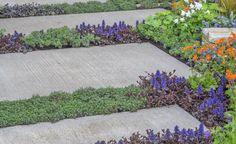 Pflasterfugen begrünen statt mühsam säubern -  Eine Idee für alle, die es natürlich lieben und nicht gerne mit dem Fugenkratzer hantieren: Die Pflasterfugen der Terrasse und der Gartenwege lassen sich mit flachen Polsterpflanzen begrünen.
