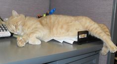 10 Cats Who Live at the Library | Mental Floss