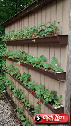 Comfy Diy Raised Garden Bed Ideas That Look Cool - 1024 x 1824 Com . Tree Comfy Diy Raised Garden Bed Ideas That Look Cool - 1024 x 1824 Com . Comfy Diy Raised Garden Bed Ideas That Look Cool - 1024 … Small Backyard Design, Small Patio, Vegetable Garden Design, Vegetable Gardening, Gardening Tips, Container Gardening, Organic Gardening, Vegetable Garden Planner, Edible Garden